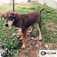 Adopt A Pet :: Reno - DeForest, WI