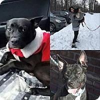 Adopt A Pet :: LEEROY - Bridgewater, NJ
