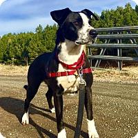 Adopt A Pet :: Leila - Delaplane, VA