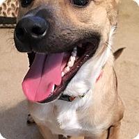 Adopt A Pet :: Jackson - Bucks County, PA