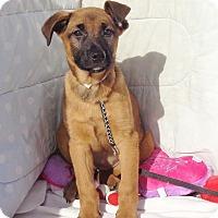 Adopt A Pet :: Netosha - West Chicago, IL