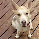 Adopt A Pet :: Macey