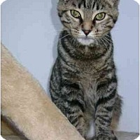Adopt A Pet :: Silvester - Etobicoke, ON