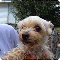 Adopt A Pet :: Pebbles - No.Charleston, SC