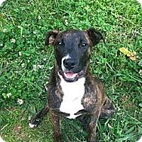 Adopt A Pet :: Diesel - Homewood, AL