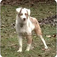 Adopt A Pet :: Wrigley - Orlando, FL