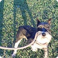 Adopt A Pet :: Gatsby - Chewelah, WA