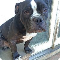 Adopt A Pet :: Robin - Van Nuys, CA