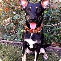 Adopt A Pet :: VICTOR - Irvine, CA