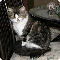 Adopt A Pet :: Wanda - Dover, OH