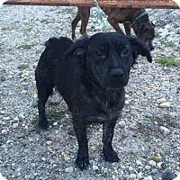 Adopt A Pet :: Autry - Reno, NV