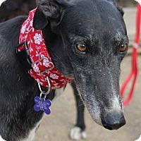 Adopt A Pet :: Sadie - Tucson, AZ