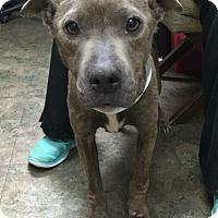 Adopt A Pet :: MARTINA - Pittsburgh, PA