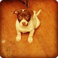 Adopt A Pet :: Saffron - Rexford, NY