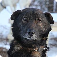 Adopt A Pet :: Mickey - Jefferson, NH