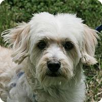 Adopt A Pet :: Remy - carlsbad, CA