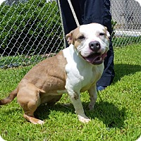Adopt A Pet :: Cameron - Windsor, VA