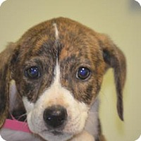 Adopt A Pet :: Demi - Chester Springs, PA
