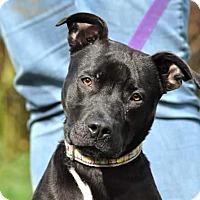 Adopt A Pet :: Bonnie - Lisbon, OH