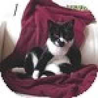 Adopt A Pet :: Sara - Vancouver, BC