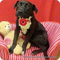 Adopt A Pet :: Oreo - Hop Bottom, PA