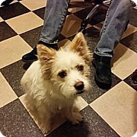 Adopt A Pet :: Lucy - PENDING, in Maine - kennebunkport, ME