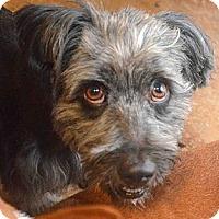 Adopt A Pet :: Ash - Phoenix, AZ