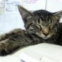 Adopt A Pet :: Mystic - Herndon, VA