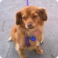 Adopt A Pet :: *URGENT* Cinnamon - Van Nuys, CA