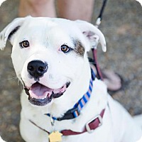 Adopt A Pet :: Petey - Atlanta, GA