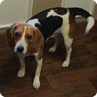 Adopt A Pet :: Brody - Dumfries, VA