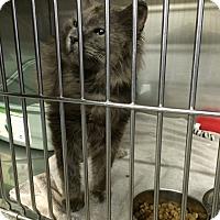 Adopt A Pet :: Hugh - Byron Center, MI