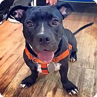 Adopt A Pet :: Stella McCartney - Jersey City, NJ