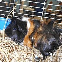 Adopt A Pet :: Wanda - Camden, DE