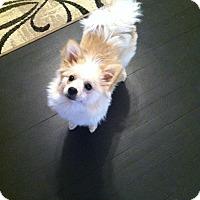 Adopt A Pet :: Ryder - Shrewsbury, NJ