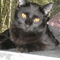 Adopt A Pet :: Suede - Bonita Springs, FL