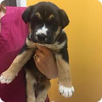 Adopt A Pet :: Lennox - Rocky Mount, NC