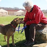 Adopt A Pet :: CoCo - Elyria, OH