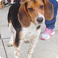 Adopt A Pet :: Baxley - Rockville, MD
