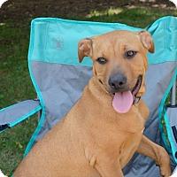 Adopt A Pet :: Serenade-Adopted! - Detroit, MI