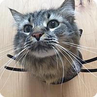 Adopt A Pet :: Clover - San Francisco, CA