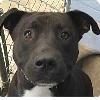 Adopt A Pet :: Clyde - Springdale, AR