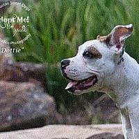 Adopt A Pet :: Dottie - Vancouver, TX