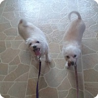 Adopt A Pet :: Lillie and Max - Harmony, Glocester, RI