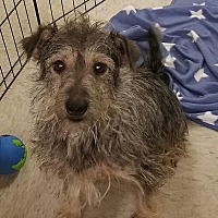 Jack Russell Terrier Mix Dog for adoption in Phoenix, Arizona - Emmy