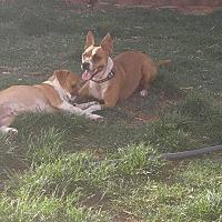 Adopt A Pet :: Mama - El Paso, TX