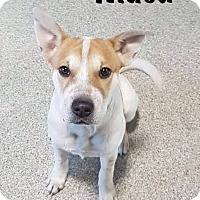 Terrier (Unknown Type, Medium)/Shar Pei Mix Dog for adoption in Calgary, Alberta - Musa