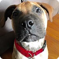 Adopt A Pet :: Thumper - Fairport, NY