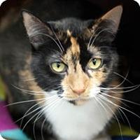 Adopt A Pet :: Princess - Martinsville, IN