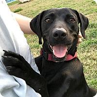 Adopt A Pet :: Fanny - San Antonio, TX